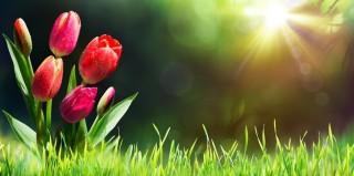 Květnové akce na Šumavě
