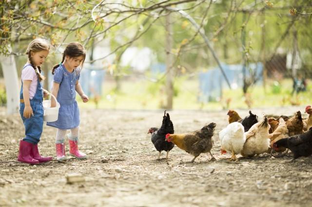 Dovolená s dětmi na Šumavě